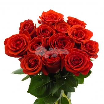 Букет из 13 Эквадорских роз