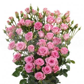 Кустовая роза поштучно